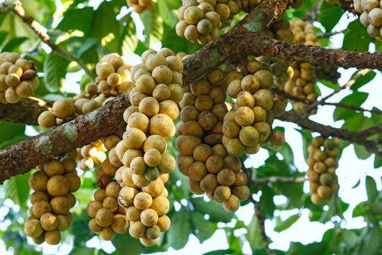 Daftar Nama Pohon di Indonesia