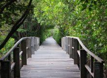mangrove-forest-bali